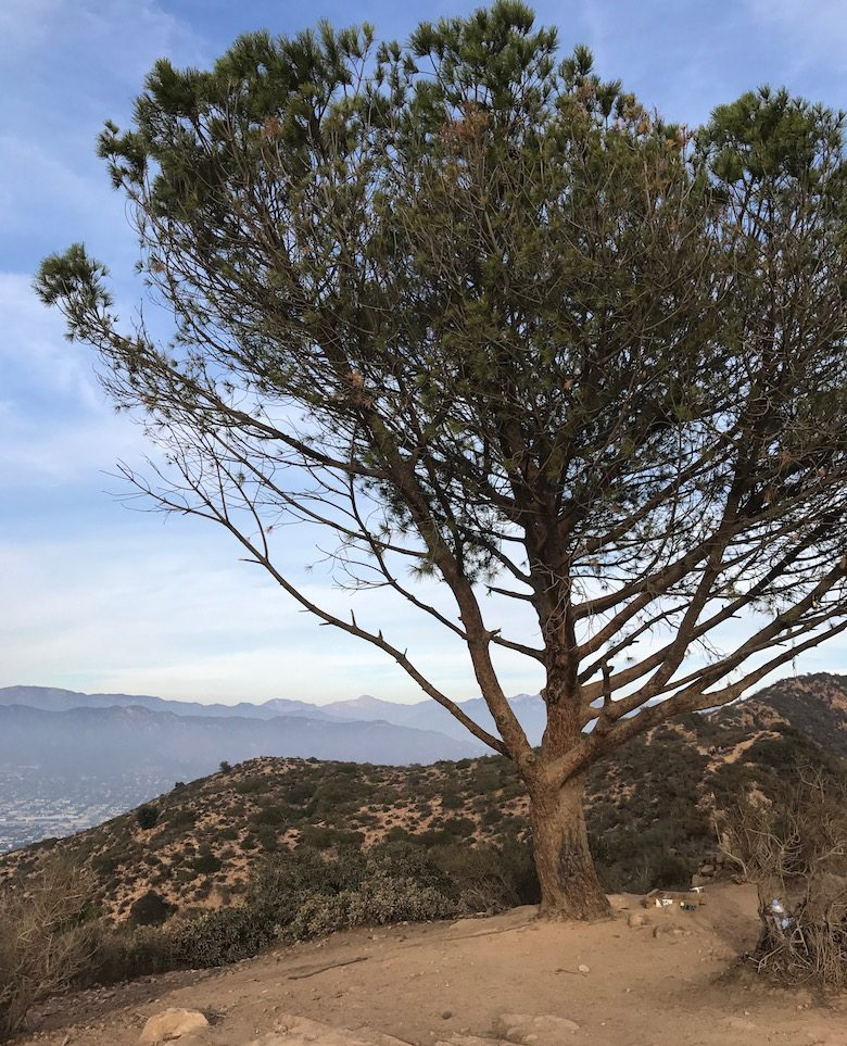 wishing tree los angeles