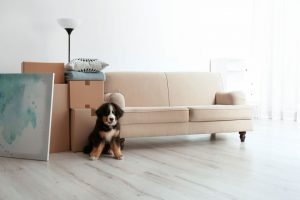 Give Your Puppy Their Own Space