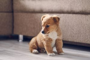 How to Potty Train Your Puppy in an Apartment