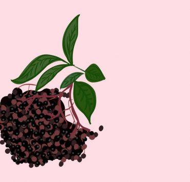 best elderberry gummies